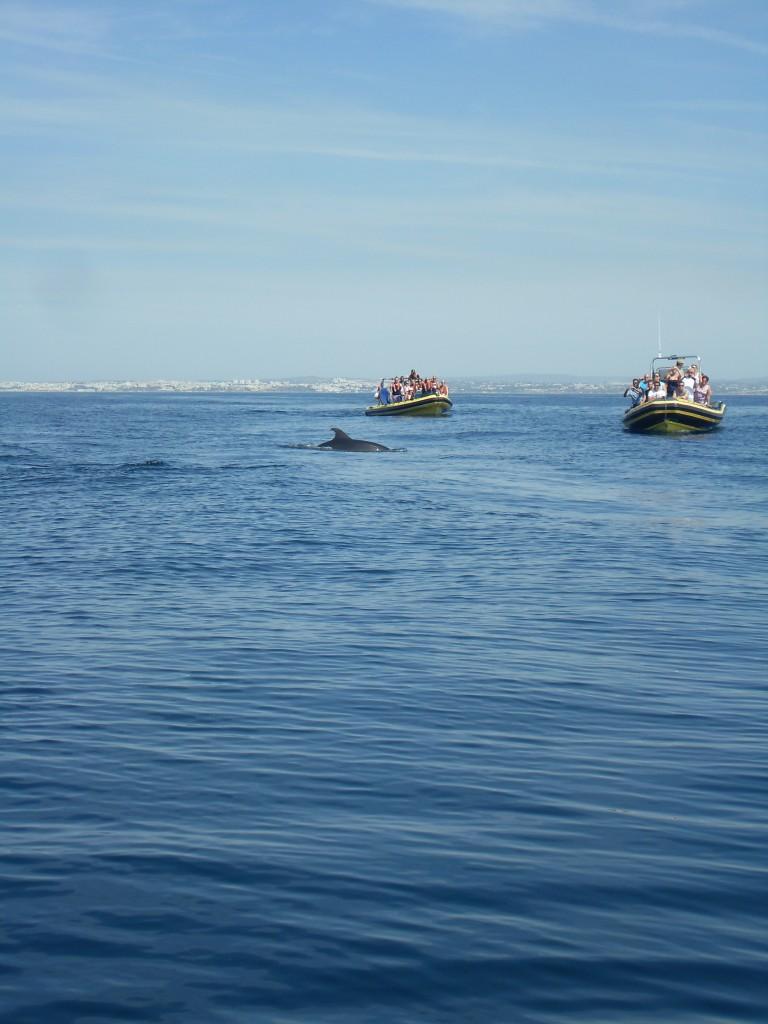 Dolfijnen in de Atlantische Oceaan